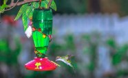 WHYMSI-Humming-Bird-feeders