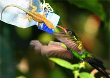 Rocklands Bird Sanctuary logo