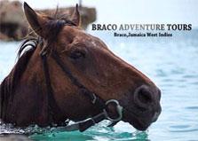Braco Stables Horseback Ride n' Swim logo