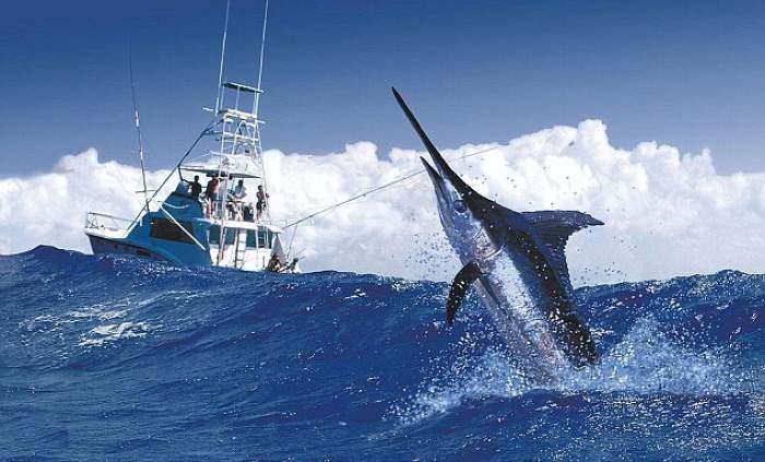 Port Antonio International Marlin Tournament logo