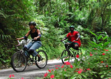 Blue Mountain Bicycle Tours Ltd   logo