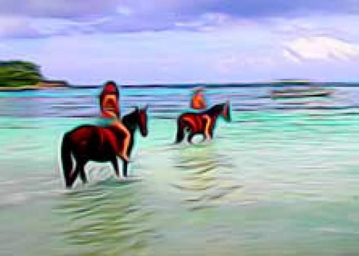 Scotti, Horse Riding & Natural Tours logo